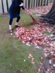 2015年12月13日狭野神社禊カフェ落ち葉を集めている1
