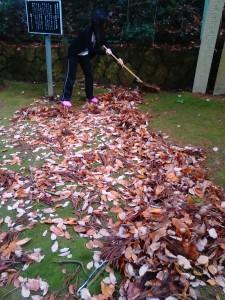 2015年12月13日狭野神社禊カフェ落ち葉を集めている2